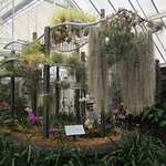 Tillandsia (bromeliad) display at the Begonia House. The cascade is Spanish moss from the US.
