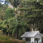 A tall Nikau palm with tree ferns at the formal garden