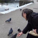 Hand-feeding brave pigeons