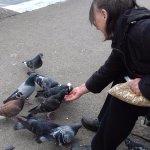 Pigeons flocking aorund to hand-feed