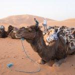 Excellent Morocco Trip