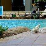 Photo of Daydream Island Resort & Spa