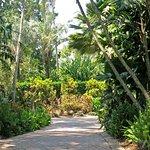 Foto de Daydream Island Resort & Spa