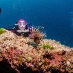 Photo of Sea Fun Divers - Day Trips