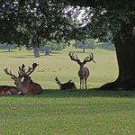 Woburn Abbey Deer Park