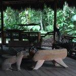 Photo of Liana Lodge