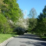 Photo of Arnold Arboretum