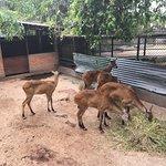 Foto de National Zoological Gardens of Sri Lanka