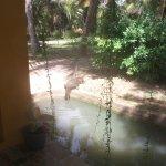Photo de Mangrove Beach Cabanas & Chalets