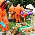 finding the queen bee