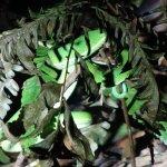 Photo de Monteverde Wildlife Refuge