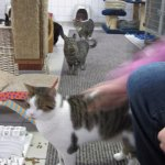 Me petting a cat at De Pozenboot