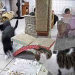 Cats at De Poezenboot.