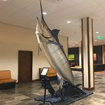 Model of record Marlin caught offshore