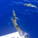 Dolphins swimming alongside our boat!