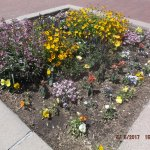 San Felipe de Neri flower beds.....
