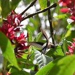 Unidentified hummingbird
