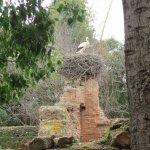 Stork nests at Chellah