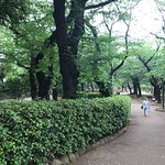 Photo of Asukayama Park