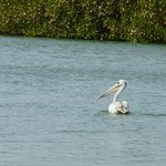 Ballade dans la lagune