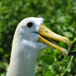 Photo of Sharksky Ecoadventures Galapagos