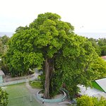 Attraction: Grand Banyan Tree of Veldihoo