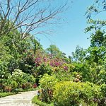 Vivid colors in the garden!
