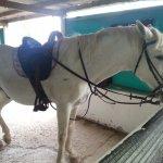 Emmas horse - Harry Potter