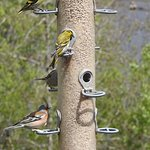Feeding station for wild birds