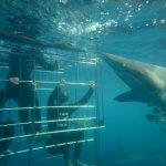 Shark Cage Diving KZN Photo