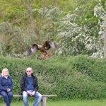 A bird of prey returns after its flight