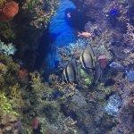 Photo of Malta National Aquarium