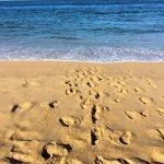 Foto de Taquaras Beach