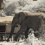 Elephant walking thru camp!