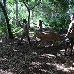 Photo of Safari Adventures Lion Encounter