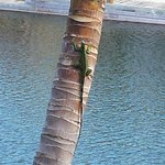 An iguana just hanging out, being cool...