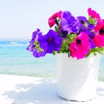 colors in brilliant sunshine in spetses