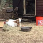 Photo de The Social Goat Bed & Breakfast
