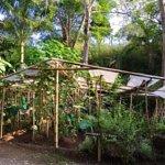 Foto de Vida Asana Eco-Retreat and Yoga Center