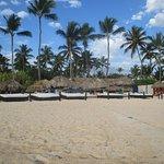 Platinum Beach