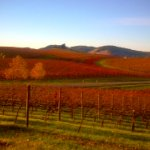 Cuvaison winery, across the highway, fall