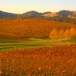 Cuvaison winery at fall, just across the highway