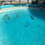 Photo de Dolphinaris Cancun