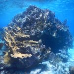 Clear waters and healthy reefs near South Caicos
