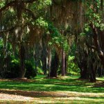 Spanish moss - park on way to Naval ship museum .. DQ not far away