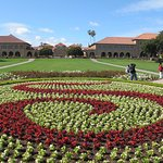 Stanford S in flowers