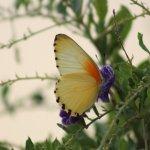Many butterfly's in the garden