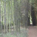 Le Jardin de Planbuisson