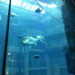 AquaDom & SEA LIFE Berlin Foto