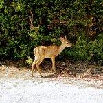 Photo of National Key Deer Refuge